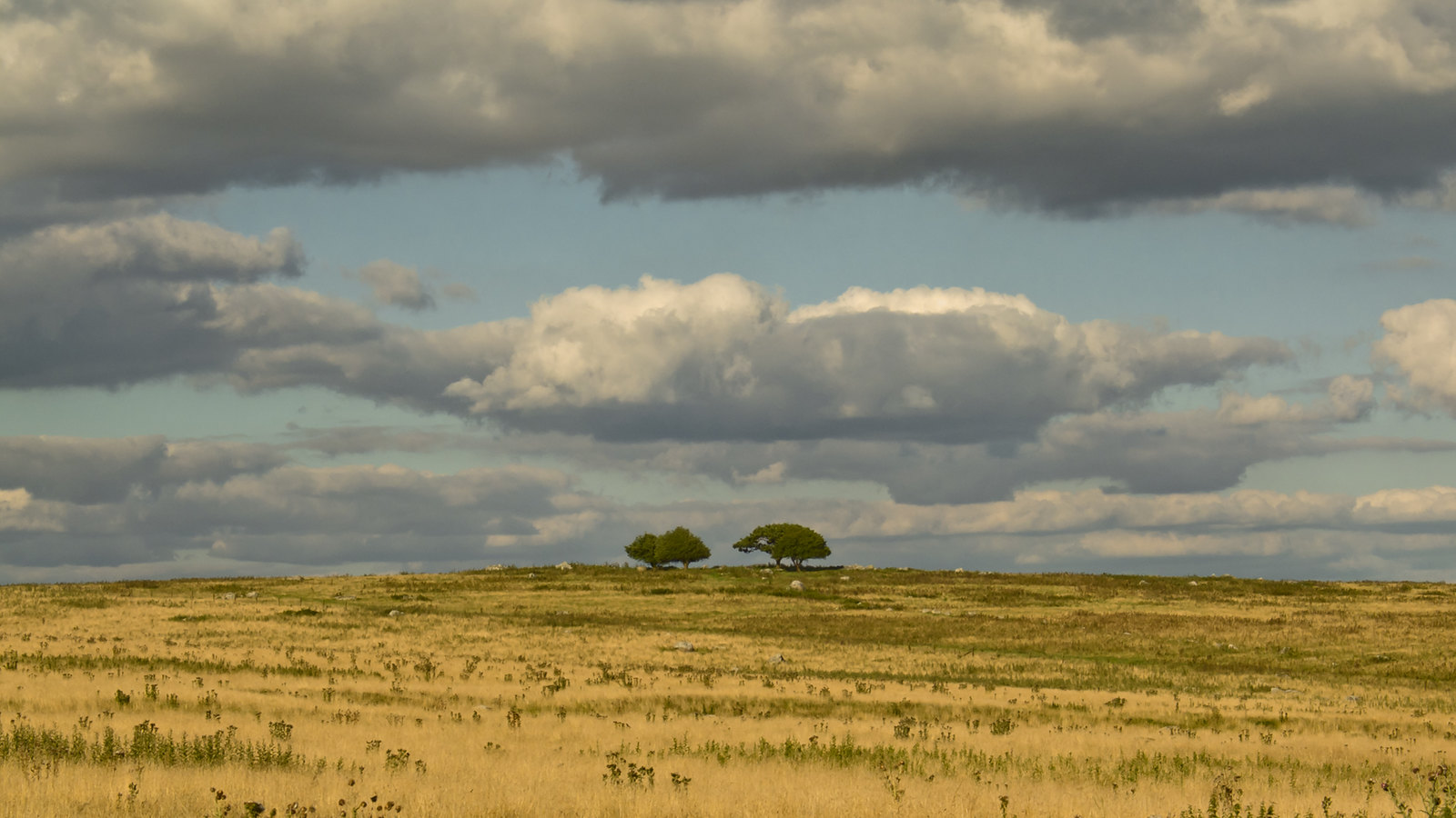 Stand of Shrubby Trees at Overton Down