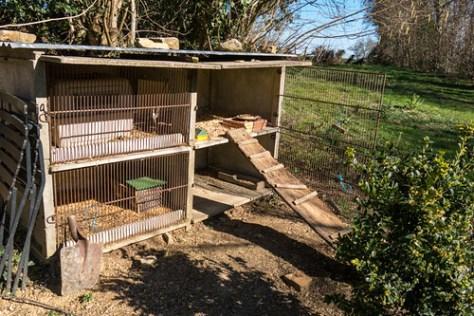 Chickens nesting box
