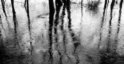 Rain on reflections