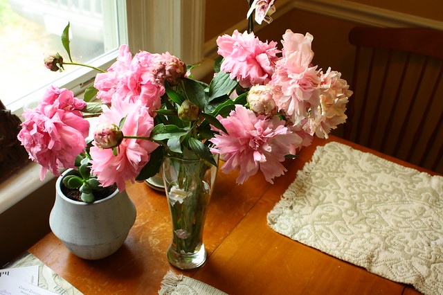 Anniversary peonies from the neighbors