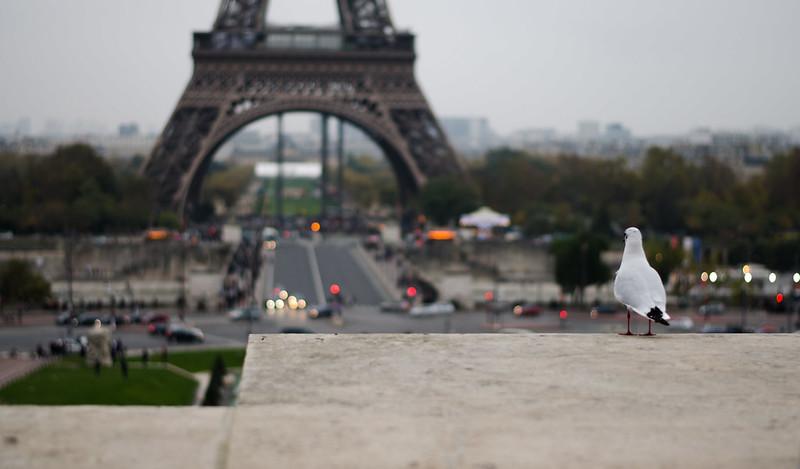 Una gaviota en París