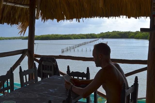 naturist 0006 mangroves, Progreso, Yucatan, Mexico
