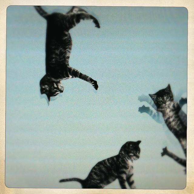 screen capture: cat-bounce.com