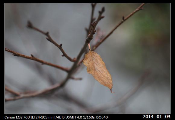 20140103_leaf