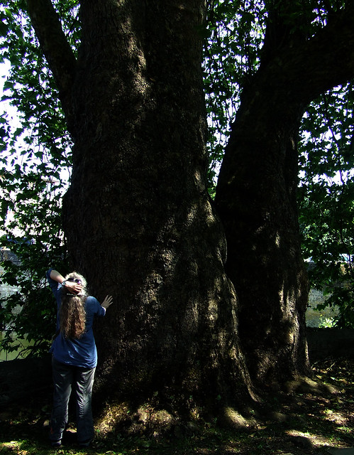 Rachel with sycamore