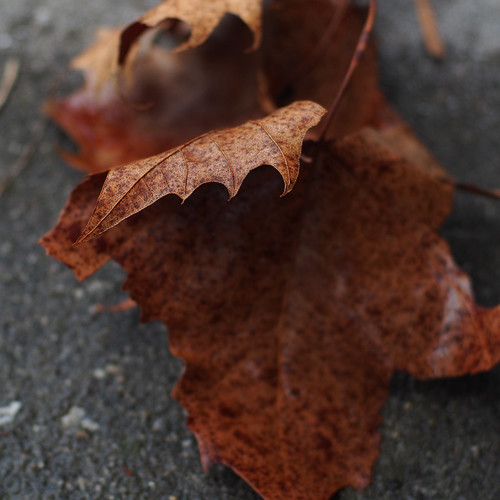 rain and leaf
