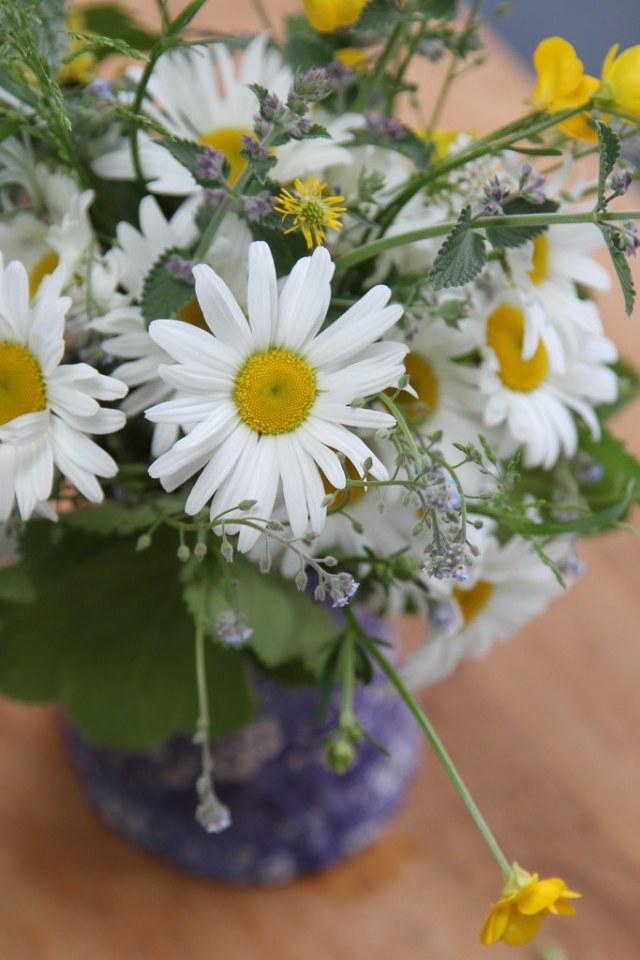 daisies,etc.