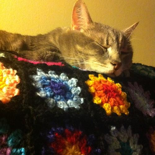 "The ""carnivorous"" blanket"