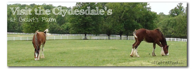 clydesdales at Grant's Farm