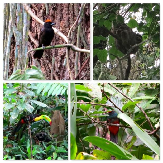 Animales Costa Rica