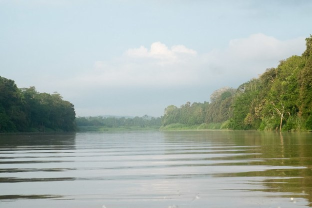 Mist rising. Kinabatangan River