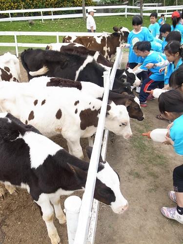 國小三年級戶外教學:嘉義獨角仙農場、綠盈牧場(8.8ys)