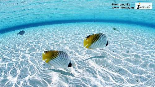 tropical fish hd wallpaper