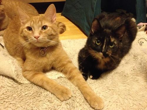 Caramel et Rousette