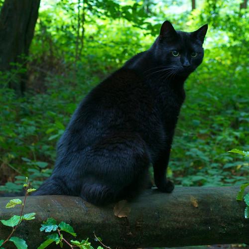 Cat Sat by Nicki Ki