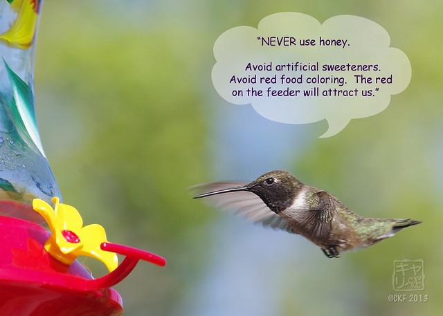 Hummingbird Dialogue 3