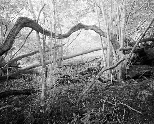 Transverse, Newtimber Hill by tubb