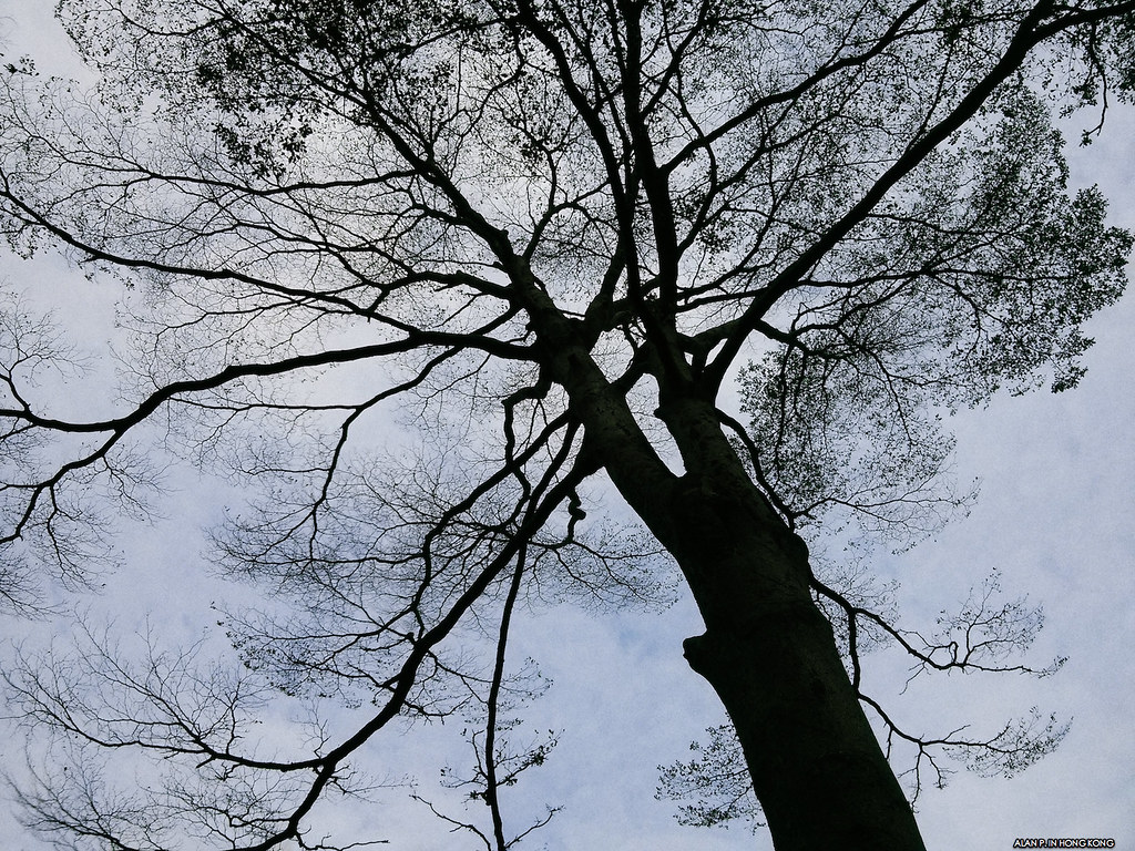 Leafless tree