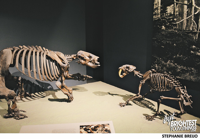 Smithsonian Dinosaur Exhibit Photos Brightest Young Things Stephanie Breijo29