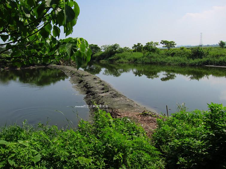 大樹舊鐵橋生態公園 (6)