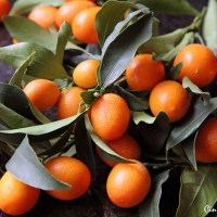 Kumquat in Honey [recipe]