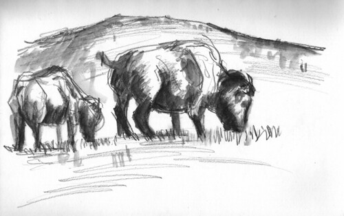 Bison by Husdant