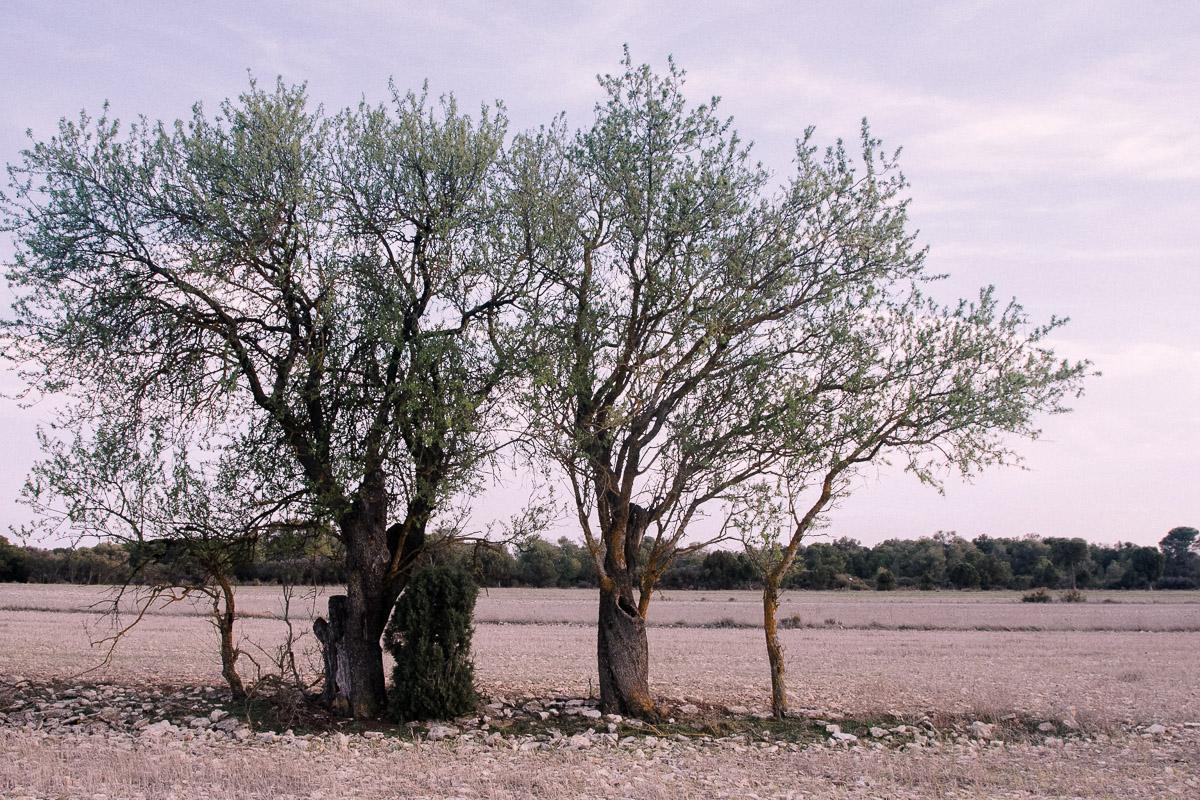 Entre Monegrillo y Castejón