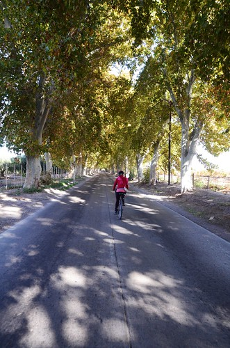 Biking in Maipu