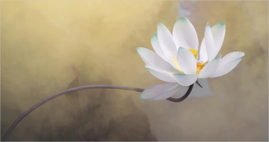 lotus flower surreal series - DD0A1871-2-1000