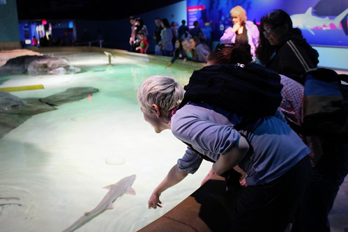 20130525. Shark petting. Indianapolis Zoo.