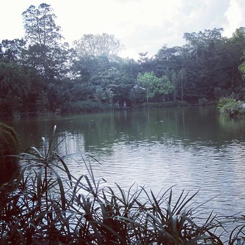 #singapore botanic gardens by @MySoDotCom