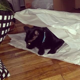 Aww, look whose helping me unpack #evil #cat #cute