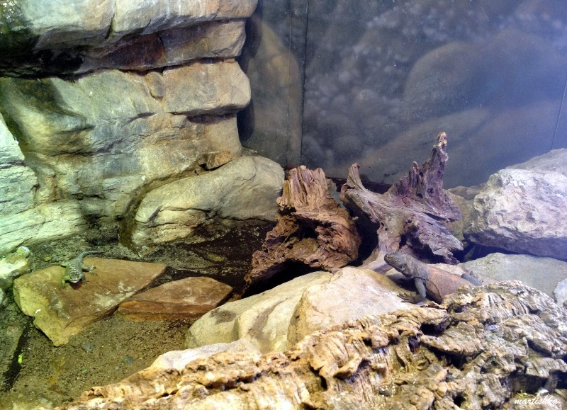 Oakland Zoo (12)