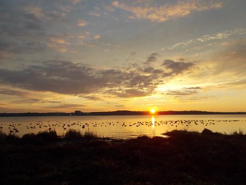 Potomac River Sunrise 12/16/2013 by Rootchopper