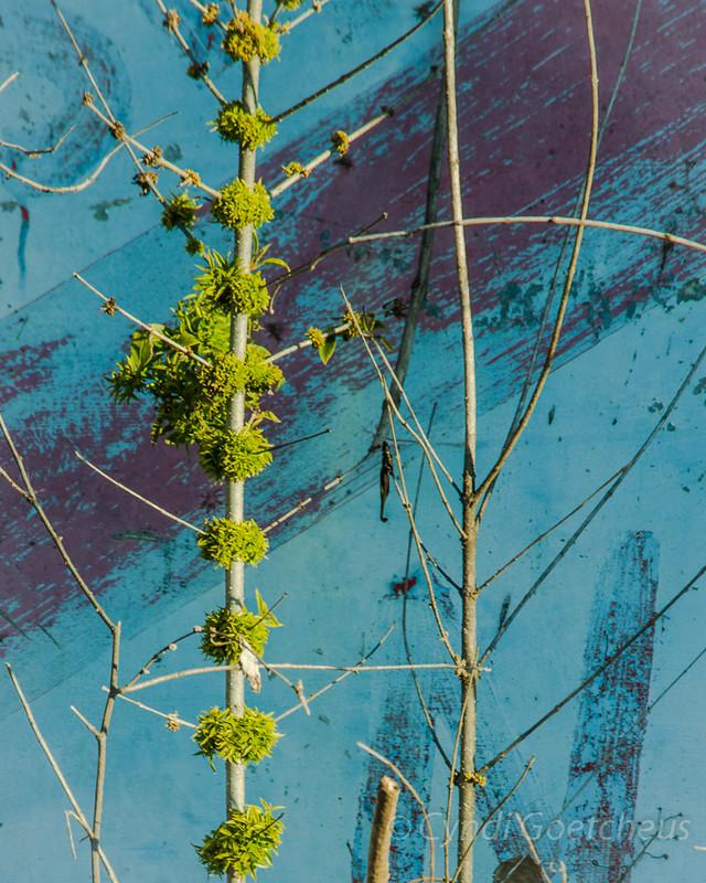 wabi sabi plant