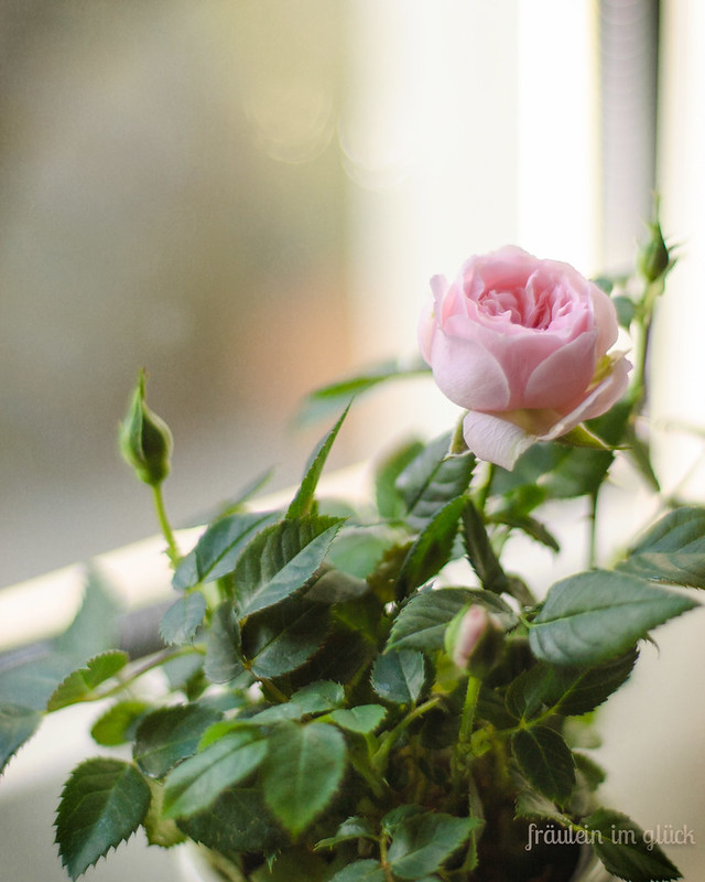 Frühlingkommt (2 von 4)