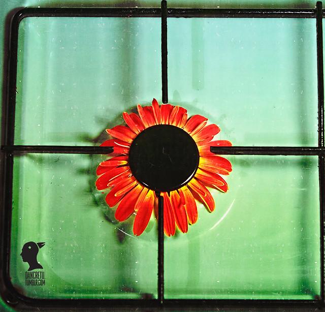 flower gas