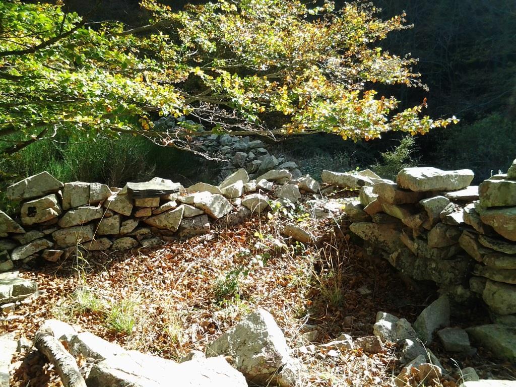 Cabana del Corral del coll Saprunera