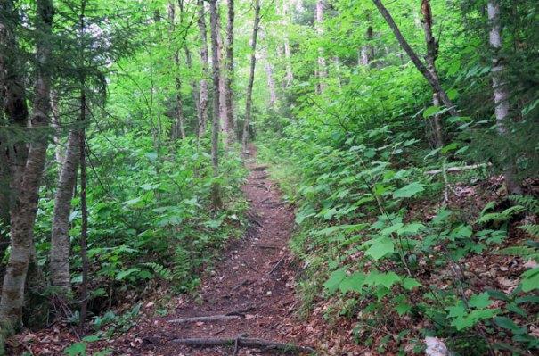 Mt. Tecumseh Trail Tripoli Early Going