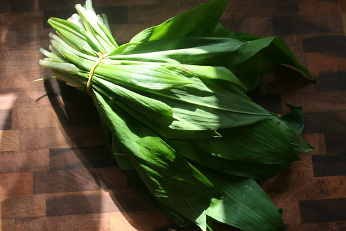 Bärlauch, wild garlic, ramsons by the james kitchen