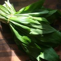 Bärlauchsuppe - wild garlic soup