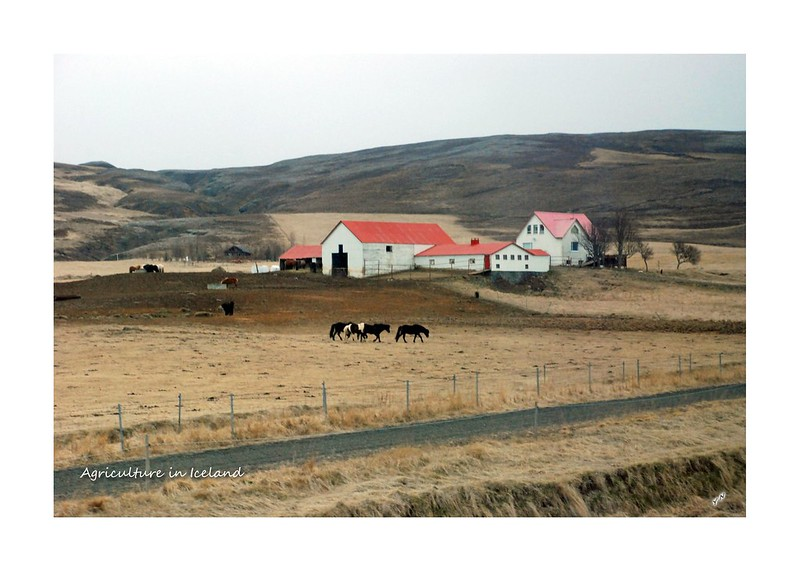 Agriculture in Iceland