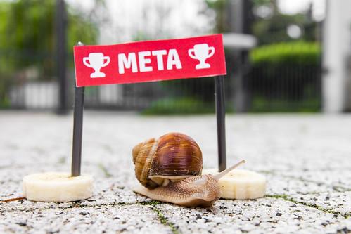 Race of snails