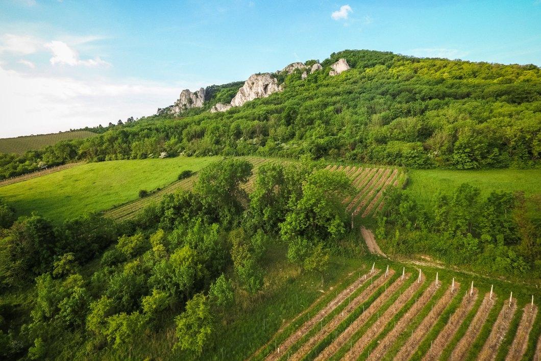 Imagen gratis de unos viñedos