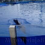 Oceanografic Miguel, focas 04