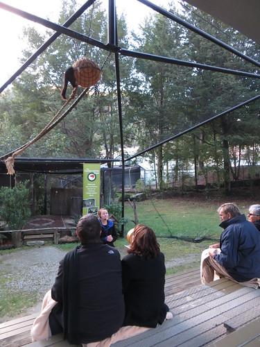 kiwi park bird show