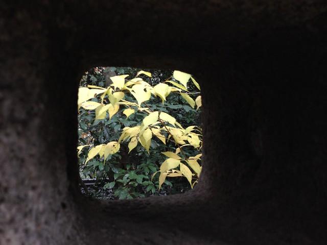 Autumn @ Hoshida