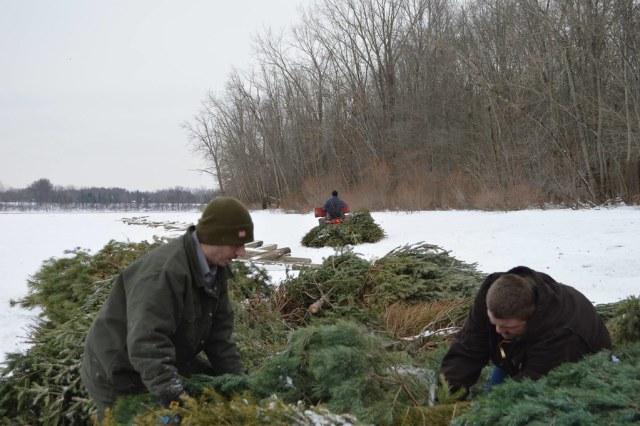 Recycling Christmas tree at Berlin Lake