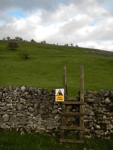 MASSIVE hill and BULL in field
