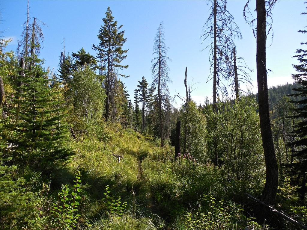 Trail 404